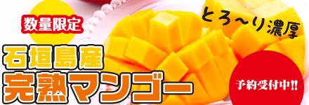 マンゴー-受付販売