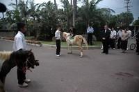 馬の入学式