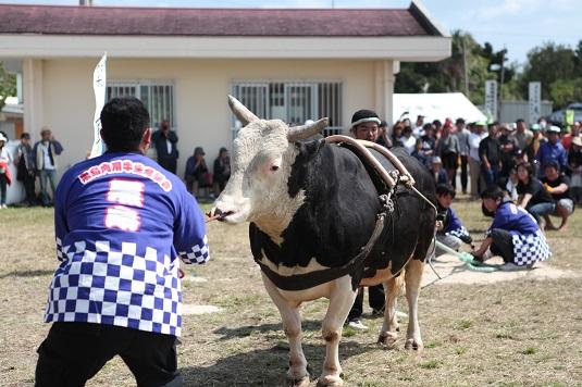 第22回黒島牛まつり盛況