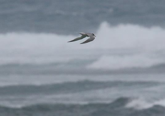 台風11号の接近で荒れる海