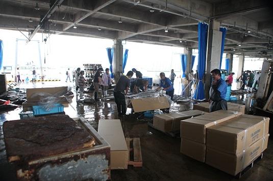 八重山漁協が熊本へマグロ約50本を出荷