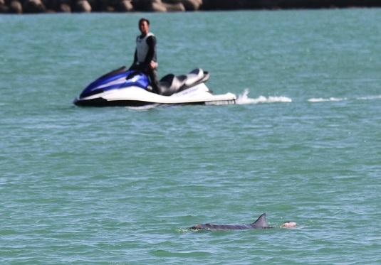 イルカがサメに襲われ血の海