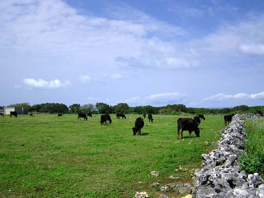 牛作り、人作り、島作り