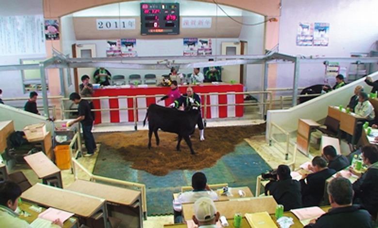 八重山家畜市場で 初セリ