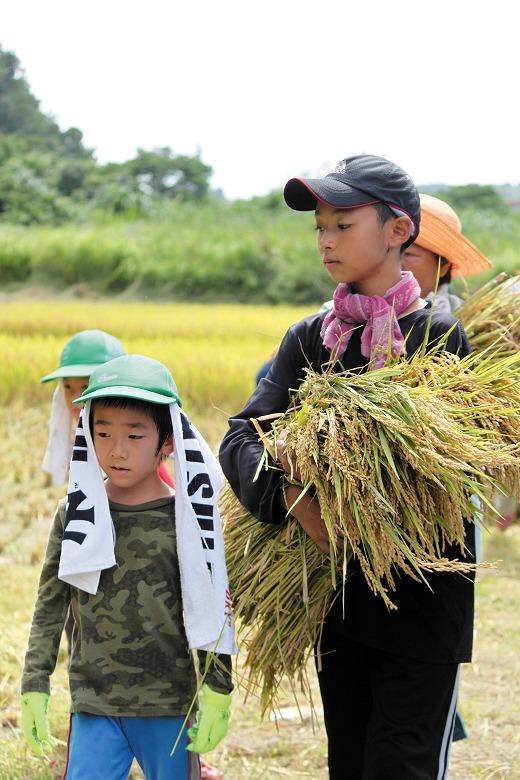 西表小中学校 稲作体験学習